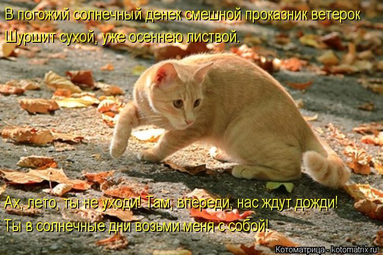 Котоматрица: В погожий солнечный денек смешной проказник ветерок Шуршит сухой, уже осеннею листвой. Ах, лето, ты не уходи! Там, впереди, нас ждут дожди! Ты