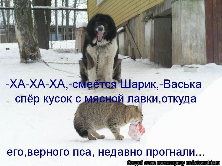 Котоматрица: спёр кусок с мясной лавки,откуда его,верного пса, недавно прогнали... -ХА-ХА-ХА,-смеётся Шарик,-Васька