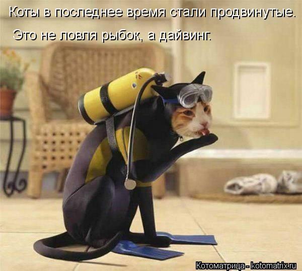 Котоматрица: Коты в последнее время стали продвинутые. Это не ловля рыбок, а дайвинг.