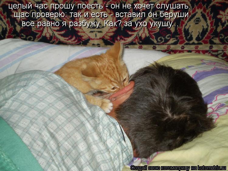 Котоматрица: целый час прошу поесть - он не хочет слушать.  щас проверю: так и есть - вставил он беруши  все равно я разбужу. Как? за ухо укушу...