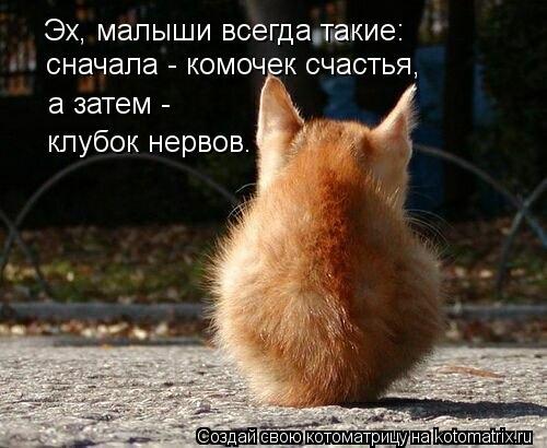 Котоматрица: Эх, малыши всегда такие: сначала - комочек счастья, а затем -  клубок нервов.