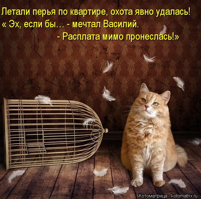 Котоматрица: Летали перья по квартире, охота явно удалась! « Эх, если бы… - мечтал Василий.  - Расплата мимо пронеслась!»