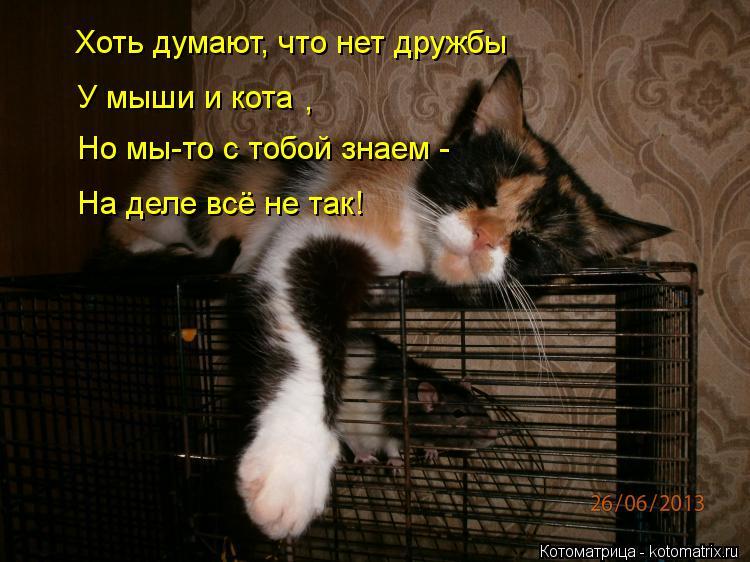 Котоматрица: Хоть думают, что нет дружбы У мыши и кота , Но мы-то с тобой знаем -  На деле всё не так!