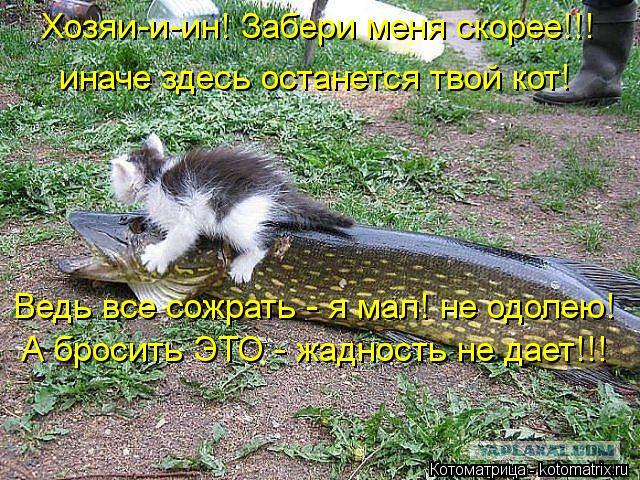 Котоматрица: Хозяи-и-ин! Забери меня скорее!!! иначе здесь останется твой кот! Ведь все сожрать - я мал! не одолею! А бросить ЭТО - жадность не дает!!!
