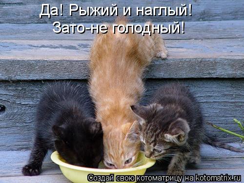 Котоматрица: Да! Рыжий и наглый! Зато-не голодный!