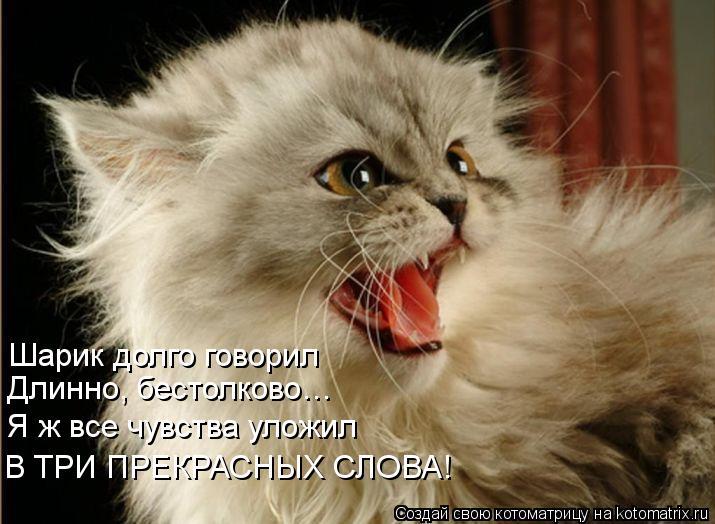 Котоматрица: Шарик долго говорил Длинно, бестолково… Я ж все чувства уложил В ТРИ ПРЕКРАСНЫХ СЛОВА!