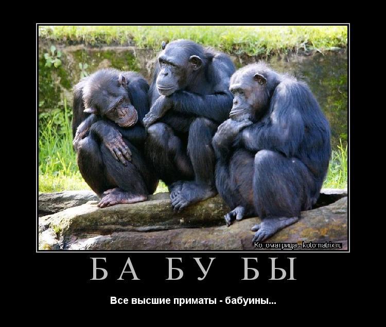 Котоматрица: БА БУ БЫ Все высшие приматы - бабуины...