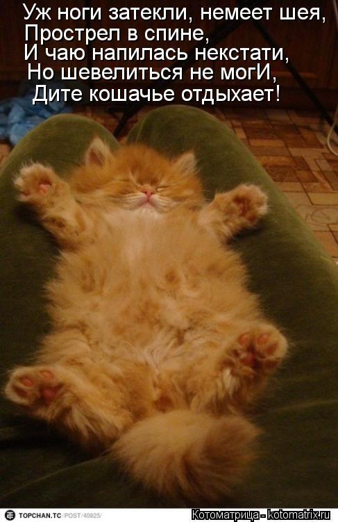 Котоматрица: Уж ноги затекли, немеет шея, Прострел в спине, И чаю напилась некстати, Но шевелиться не могИ, Дите кошачье отдыхает!