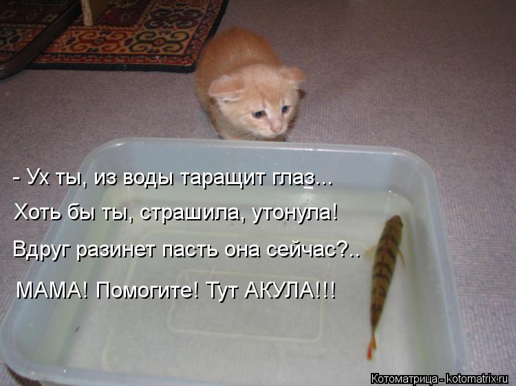 Котоматрица: - Ух ты, из воды таращит глаз... Хоть бы ты, страшила, утонула! Вдруг разинет пасть она сейчас?.. МАМА! Помогите! Тут АКУЛА!!!