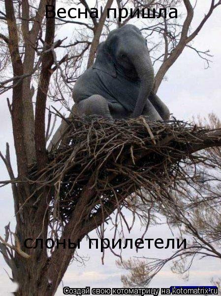 Котоматрица: Весна пришла слоны прилетели