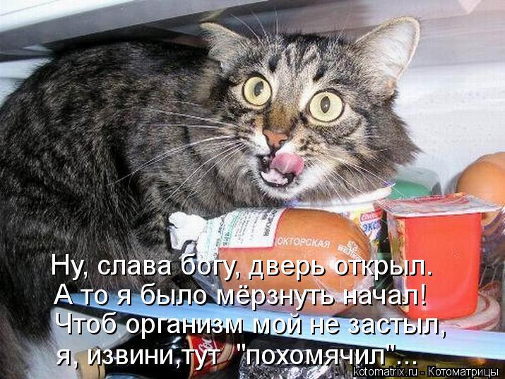 """Котоматрица: Ну, слава богу, дверь открыл. А то я было мёрзнуть начал! Чтоб организм мой не застыл, я, извини,тут  """"похомячил""""..."""