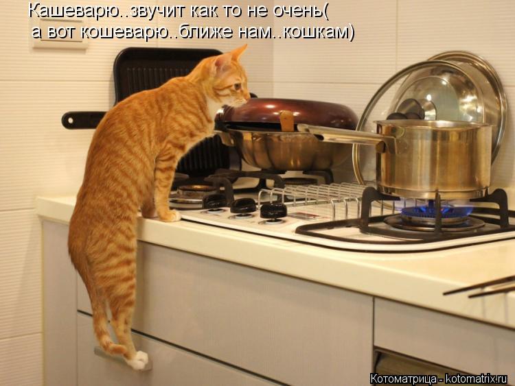 Котоматрица: Кашеварю..звучит как то не очень( а вот кошеварю..ближе нам..кошкам)