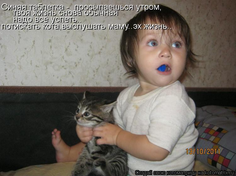 Котоматрица: твоя жизнь снова обычная  надо всё успеть.. потискать кота,выслушать маму..эх жизнь.. Синяя таблетка -  просыпаешься утром,