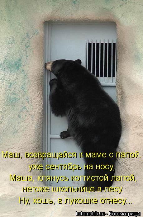 Котоматрица: уже сентябрь на носу, Маш, возвращайся к маме с папой, Маша, клянусь когтистой лапой, Ну, хошь, в лукошке отнесу... негоже школьнице в лесу.