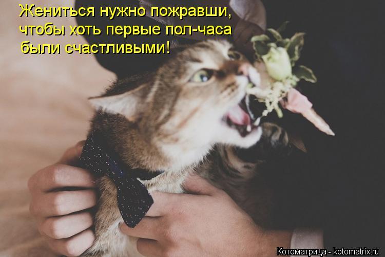 Котоматрица: Жениться нужно пожравши, чтобы хоть первые пол-часа были счастливыми!
