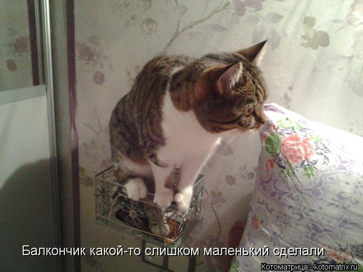 Котоматрица: Балкончик какой-то слишком маленький сделали