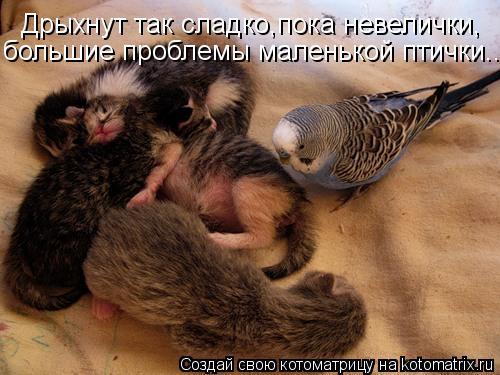 Котоматрица: Дрыхнут так сладко,пока невелички, большие проблемы маленькой птички...