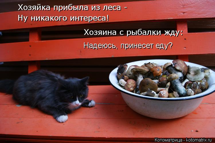 Котоматрица: Хозяйка прибыла из леса -  Ну никакого интереса! Хозяина с рыбалки жду:  Надеюсь, принесет еду?