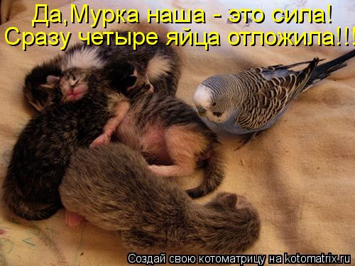 Котоматрица: Да,Мурка наша - это сила! Сразу четыре яйца отложила!!!