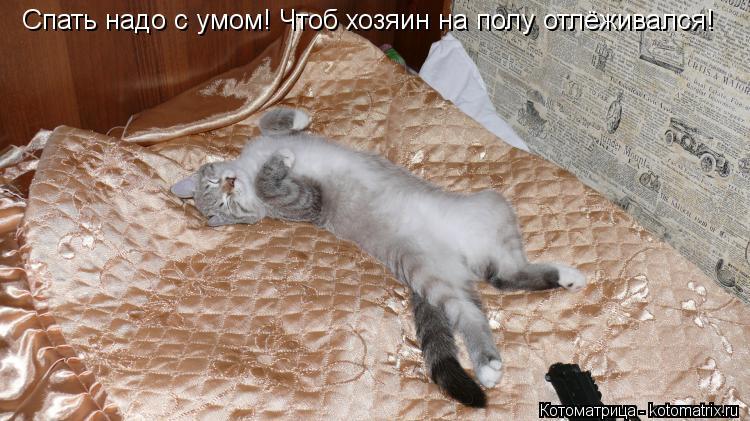 Котоматрица: Спать надо с умом! Чтоб хозяин на полу отлёживался!