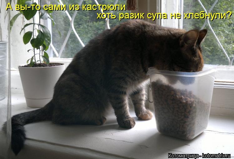 Котоматрица: А вы-то сами из кастрюли  хоть разик супа не хлебнули?