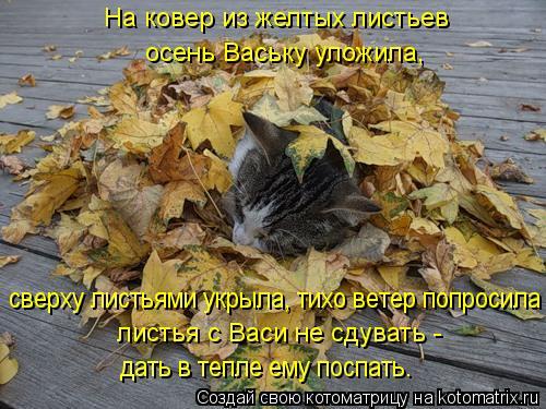Котоматрица: листья с Васи не сдувать -  сверху листьями укрыла, тихо ветер попросила дать в тепле ему поспать. На ковер из желтых листьев осень Ваську ул