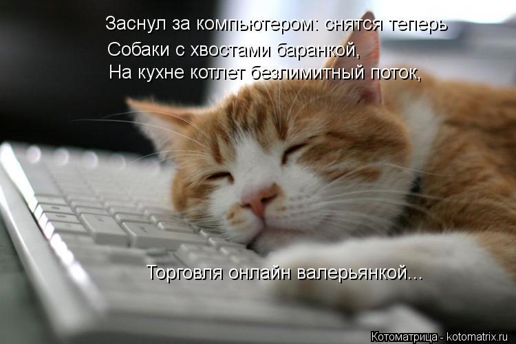 Котоматрица: Заснул за компьютером: снятся теперь Собаки с хвостами баранкой, Торговля онлайн валерьянкой... На кухне котлет безлимитный поток,