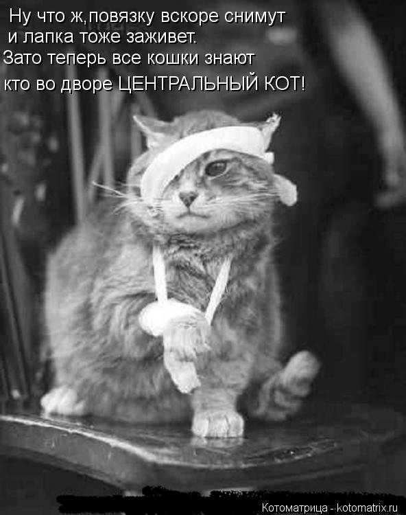 Котоматрица: Ну что ж,повязку вскоре снимут и лапка тоже заживет. Зато теперь все кошки знают кто во дворе ЦЕНТРАЛЬНЫЙ КОТ!