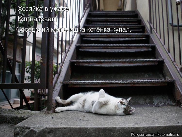 Котоматрица: Хозяйка в ужасе! Кот наповал! Соседский мальчишка котёнка купал.