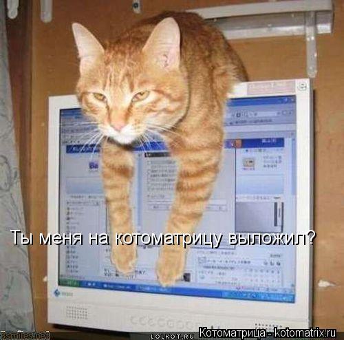 Котоматрица: Ты меня на котоматрицу выложил?