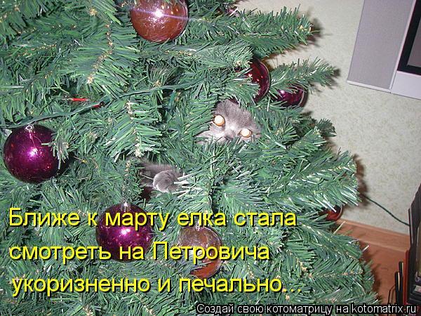 Котоматрица: Ближе к марту елка стала  смотреть на Петровича укоризненно и печально...