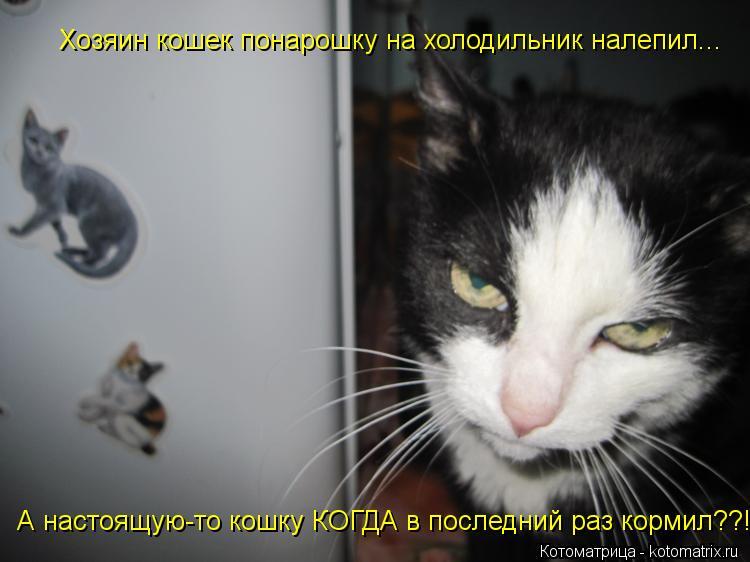 Котоматрица: Хозяин кошек понарошку на холодильник налепил... А настоящую-то кошку КОГДА в последний раз кормил??!