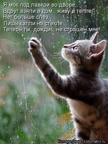 Котоматрица: Я мок под лавкой во дворе.. Вдруг взяли в дом.. живу в тепле! Теперь ты, дождик, не страшен мне! Нет больше слёз.. Лишь капли на стекле...