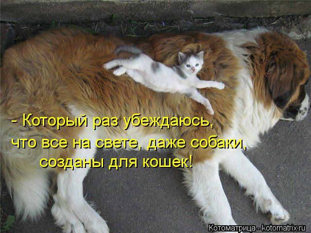 Котоматрица: - Который раз убеждаюсь, что все на свете, даже собаки, созданы для кошек!