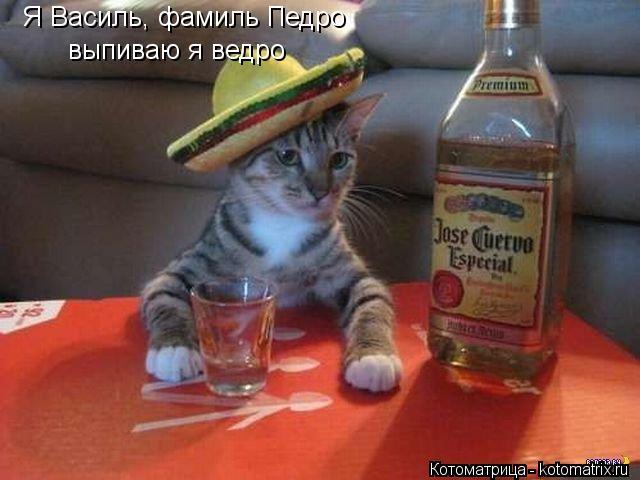 Котоматрица: Я Василь, фамиль Педро выпиваю я ведро