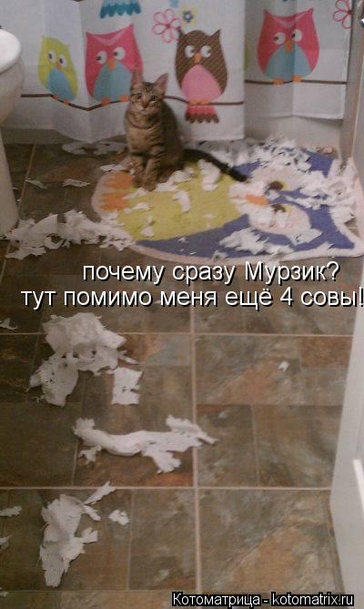 Котоматрица: почему сразу Мурзик? тут помимо меня ещё 4 совы!