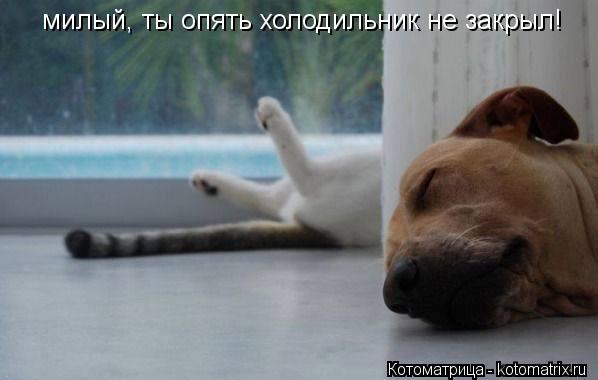Котоматрица: милый, ты опять холодильник не закрыл!