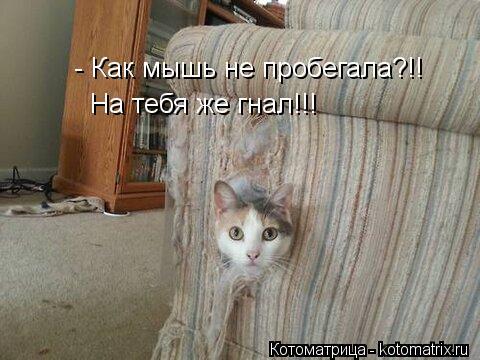Котоматрица: - Как мышь не пробегала?!! На тебя же гнал!!!