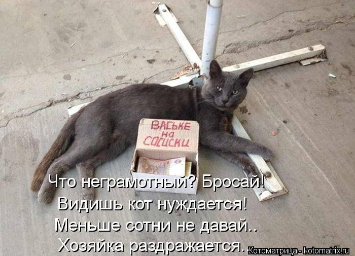 Котоматрица: Что неграмотный? Бросай! Видишь кот нуждается! Меньше сотни не давай.. Хозяйка раздражается..