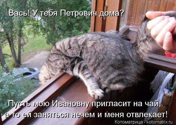 Котоматрица: Вась! У тебя Петрович дома? Пусть мою Ивановну пригласит на чай, а то ей заняться нечем и меня отвлекает!