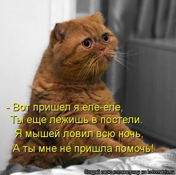 Котоматрица: - Вот пришел я еле-еле, Ты еще лежишь в постели. Я мышей ловил всю ночь, А ты мне не пришла помочь!