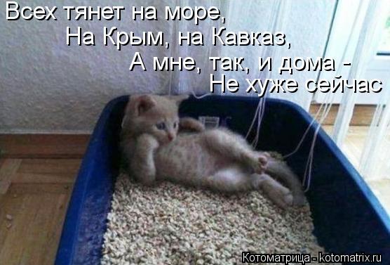 Котоматрица: Не хуже сейчас Всех тянет на море, На Крым, на Кавказ, А мне, так, и дома -