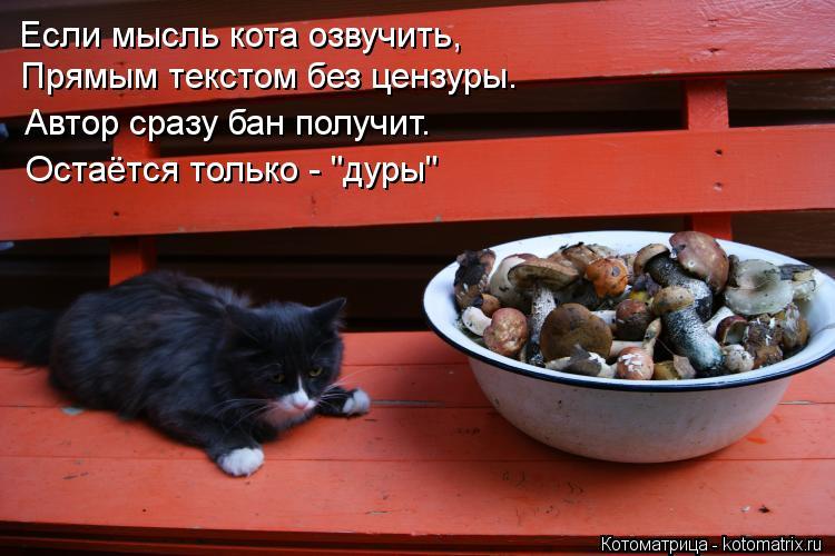 """Котоматрица: Если мысль кота озвучить, Прямым текстом без цензуры. Автор сразу бан получит. Остаётся только - """"дуры"""""""