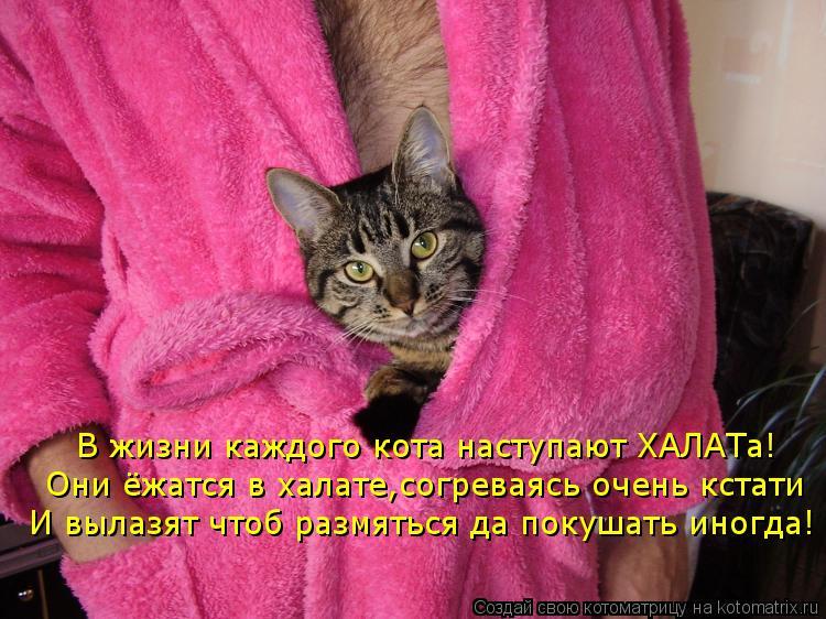 Котоматрица: В жизни каждого кота наступают ХАЛАТа! Они ёжатся в халате,согреваясь очень кстати И вылазят чтоб размяться да покушать иногда!