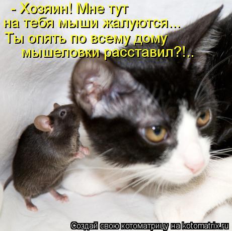 Котоматрица: - Хозяин! Мне тут  на тебя мыши жалуются... Ты опять по всему дому мышеловки расставил?!..