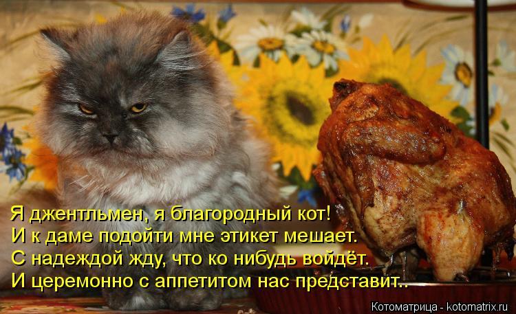 Котоматрица: Я джентльмен, я благородный кот! И к даме подойти мне этикет мешает. С надеждой жду, что ко нибудь войдёт. И церемонно с аппетитом нас предста