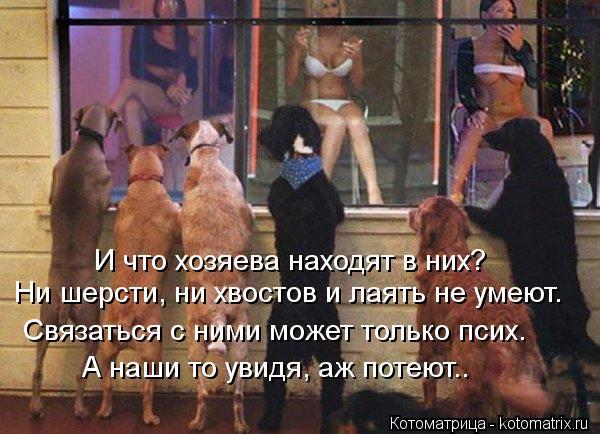 Котоматрица: И что хозяева находят в них? Ни шерсти, ни хвостов и лаять не умеют. А наши то увидя, аж потеют.. Связаться с ними может только псих.