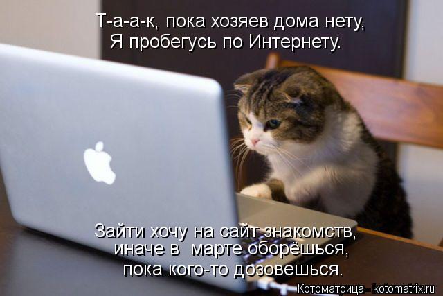 Котоматрица: Т-а-а-к, пока хозяев дома нету, Я пробегусь по Интернету. Зайти хочу на сайт знакомств, пока кого-то дозовешься. иначе в  марте оборёшься,