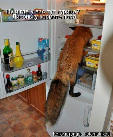 Котоматрица: Ну и где у вас тут курица? Лисоньку кормить пора.