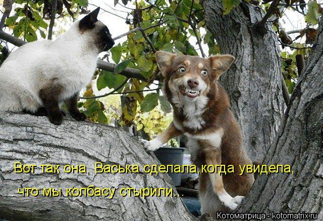 Котоматрица: Вот так она, Васька сделала,когда увидела, что мы колбасу стырили...